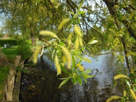 LPEFB art art-willow