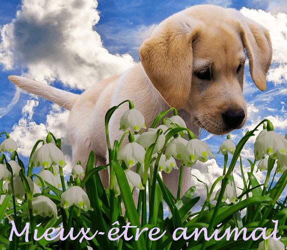 LPEFB Ateliers Mieux-être animal